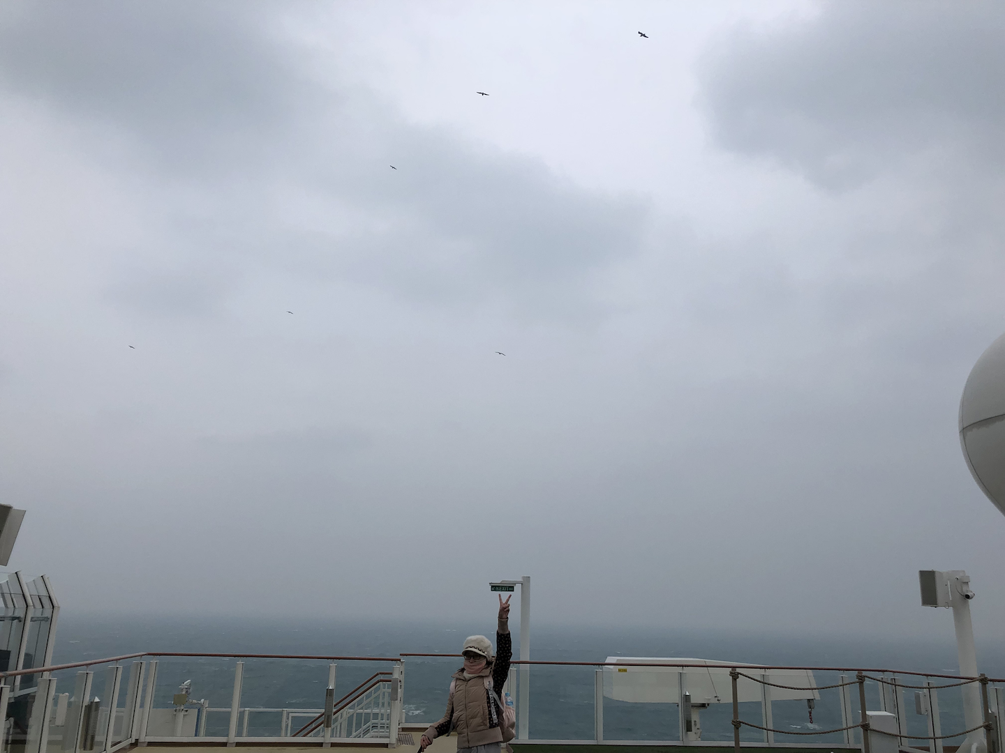 2019/cruise-seagull.png